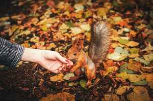 person holding squirrel